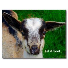 Funny Goat Parody Post Card #angelandspot #goat #postcard #letitgoat #parody