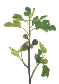 GR    Branch