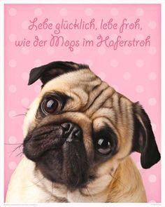 Hunde - Mops - Dog Tier Animals Lebe Glücklich Mini Poster Plakat Druck - Grösse 40x50