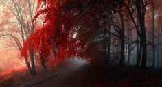-Through inner world- by Janek-Sedlar.deviantart.com