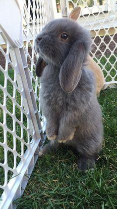 The most precious baby bunny!