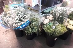 Snittet 3 bøtter med forskjellige blomster. 1/8