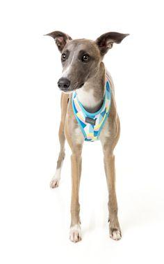 FuzzYard South Beach Dog Harness