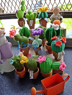 When I planted cactus If you're interested, See me.https://www.facebook.com/pages/Happy-knite-By-Suchanya/688314697982080