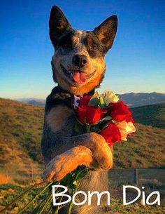 Fica Cãomigo: Para o dia ficar mais feliz, várias imagens lindas...