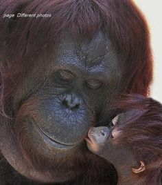 A kiss for Mama!   Animals feel love. They express all manner of emotions, just not in words.