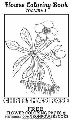 Creative Haven Vintage Flower Seed Packets Coloring Book