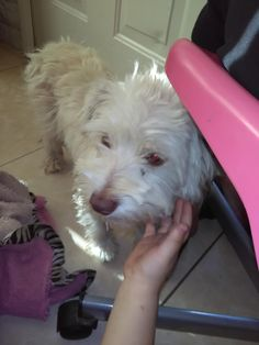 FOUND DESCRIPTION Very friendly male unaltered AREA LAST SEEN Phoenix, AZ 85029 ADDRESS LAST SEEN 35th cactus phoenix PHONE (602) 668-3769