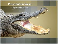 Download #editabletemplates.com's #premium and cost-effective #Alligator #editable #PowerPoint #template now. #Editabletemplates.com's Alligator #presentation #templates are so easy to use, that even a layman can work with these without any problem. Get our Alligator #powerpoint #presentation #template now for professional #PowerPoint #presentations with compelling PowerPoint #slide #designs.