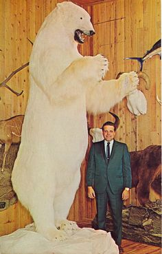 To our knowledge this is the largest bear taken on earth according to physical size and body weight, including all species—polar, brown bear and kodiak. Shot by Bill Nottley, 1967.  Hunts arranged  World-Wide Trophy Outfitters  Spokane, Washington