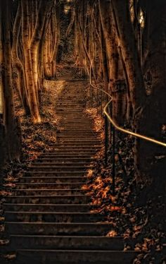 I can almost SEE Hansel and Gretel creeping up those steps!  Forest Steps, Wurzburg, Germany