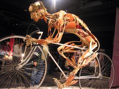 Gunther von Hagens Body Worlds exhibit. I went to the Dallas exhibit in 2007 with my anatomy & physiology class, it was awesome!
