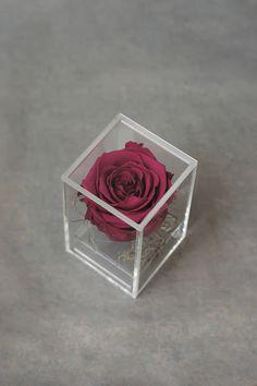 Flowers of Soul: Trandafir nemuritor in cutie transparenta cu capac