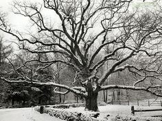 Black and White Pictures - Bedford Oak, New York City - Black and White Wallpapers Photography Essentials, City Photography, Nature Photography, Black And White City, Black And White Pictures, Marrakesh, Nature Images, Nature Pictures, Art Pictures