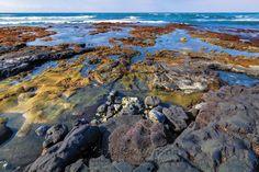 Algae & Seaweed, Sea Turtle Heaven   by Kayla Stevenson Kiholo State Park Reserve, Big Island of Hawaii