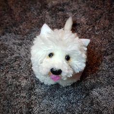 Pom Pom Animals, Westies, Lana, Felt, Angel, Christmas Ornaments, Holiday Decor, Dogs, Cute