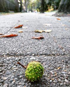 autumn, colors, photography, places, travel, chestnut, park, nature, sun, photo…