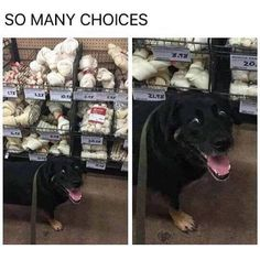 Some of the best feelings in the world are shared with fellow animal brethren #miami #miamicomedy #miamidog #dog #doglove #miamiwednesday #wednesday #miamiafternoon #pup #choices #decisionsdecisions