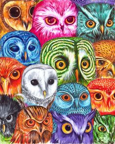 Owl Collector  Acrylic on cotton Paper