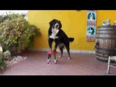 Dog Dance - Dog Training : Beautiful that way .