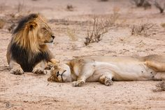 Exhaustion - Cat Nap Time by Chris Petersen - Photo 129574757 - 500px