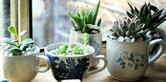 #succulents #cute