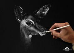 Less is more!  Artist Richard Symonds using a single white Pablo pencil from our Caran d'Ache range  Instagram: @richardsymondsartist  Twitter: @richwildart  Facebook: Richard Symonds Artist  Site: www.richardsymonds.co.uk