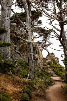 Gorgeous Walking Trails Point Lobos in California. Looks like a nice hike! Carmel California, California Coast, California Travel, Monterey California, Monterey County, Northern California, Salinas California, Point Lobos State Reserve, Places To Travel