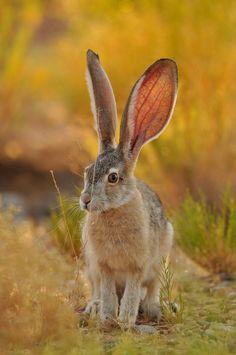 earthandanimals:   Wild Rabbit   Photo byGustavo Carneiro