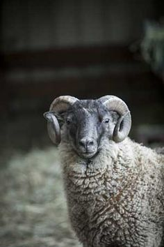 KnitPicks Greeting Cards - Sheep from KnitPicks.com