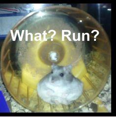 Fat hamster is so cute!