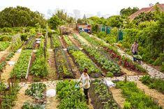 Gardening   Mindfulness = Mindful Gardening