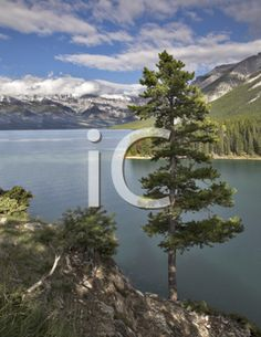 iCLIPART - A lonely pine on abrupt coast of mountain northern lake