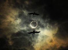 Crows flank the eclipse in Ichiro Takabatake's photo.