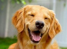 A dog owns nothing, yet is seldom dissatisfied.