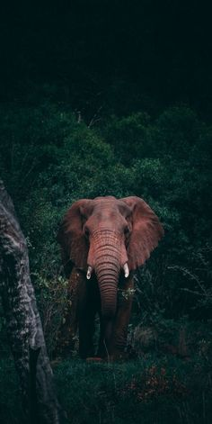 The Effective Pictures We Offer You About animal wallpaper iphone photography A quality picture can Wild Animals Photography, Elephant Photography, Wildlife Photography, Ocean Photography, Elephant Love, Elephant Art, Wild Elephant, Elefant Wallpaper, Nature Animals