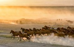 Horses running Photo by Nuri Sert — National Geographic Your Shot