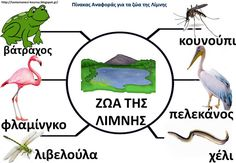 Τα ζώα της λίμνης: 13 χρήσιμες συνδέσεις και 3 πίνακες αναφοράς Projects To Try, School, Kids, Animals, Young Children, Boys, Animales, Animaux, Animal