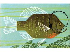 Fish Respiration by Charley Harper. The Giant Golden Book of Biology, 1961 Charley Harper, Dream Drawing, Animal Graphic, Fish Design, Fish Art, Art And Illustration, Wildlife Art, Elementary Art, Decoration