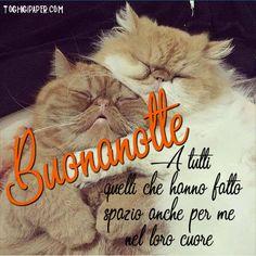BUONGIORNO BUONANOTTE GATTI ⋆ Toghigi♥Paper Good Night, Cats, Instagram, Animals, Facebook, Dolce, Fantasy, Palmyra, Bonjour