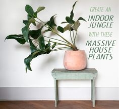 Monster Greenery: Create an Indoor Jungle with these Large Indoor Plants