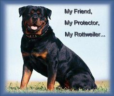 Rottie Cute  My friend My Protector My Rottweiler<3