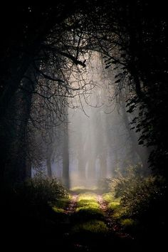 Beautiful path through the woods