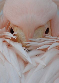 AMAZING I've never seen one of these before ~ Pink Pelican