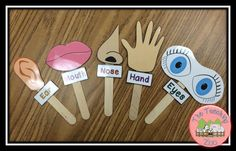 Five Senses - Sense Sticks from The Teaching Zoo!