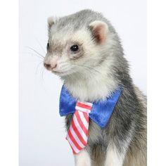 Ferret Week, Day Un Petit Chapeau Ferret Clothes, Animals And Pets, Cute Animals, Cute Ferrets, Cute Animal Pictures, Cute Creatures, Pet Store, I Love Cats, Pets