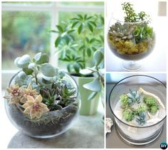 Succulent Glass Vessel Terrarium-DIY Mini Fairy Terrarium Garden Ideas
