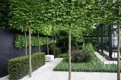 Pleached Trees Chelsea Garden Design - Your Home Design (shared via SlingPic) Back Gardens, Small Gardens, Outdoor Gardens, Courtyard Gardens, Contemporary Garden Design, Landscape Design, Urban Garden Design, Modern Landscaping, Garden Landscaping
