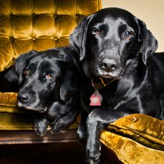 I LOVELOVELOVE the BLACK DOGS BLOG by my sweet friend & awesome photographer, Holly Brown. This is Evie and Charlie.