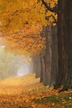 OMG this is so beautiful!   Golden Path, Ontario, Canada:) http://www.travelbrochures.org/228/north-america/travel-canada